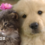 Cat vs Dog: Which is the best pet for you?
