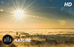 Nature wallpapers banner