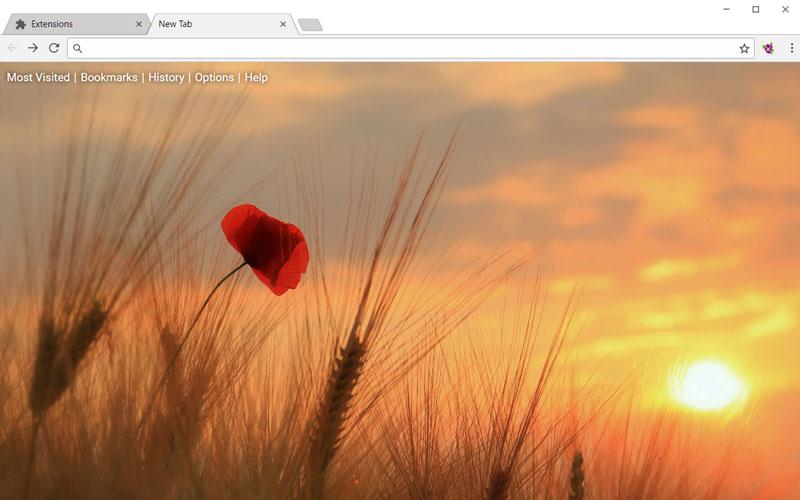 Poppy in the sunset
