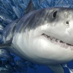5 Facts About Sharks You Probably Didn't Know